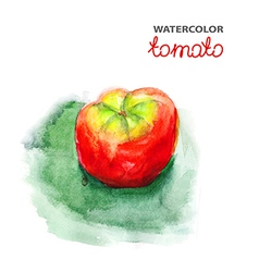Tomato watercolor painting vector image
