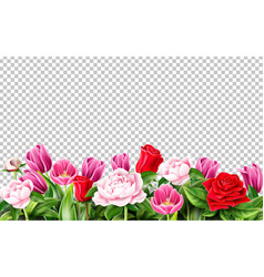 tulip rose peony flower on transparent vector image