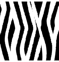 zebra fur design vector image