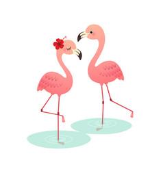 couple pink flamingo vector image
