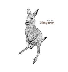kangaroo hand drawing vector image