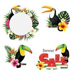 Toucans set vector