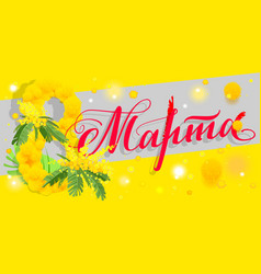 8 march russian translation yellow mimosa acacia vector