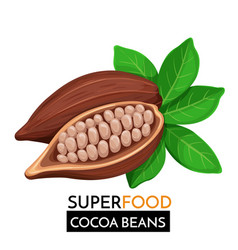 cocoa beans icon vector image