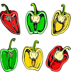Colorful halves of sweet pepper vector