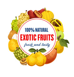 exotic fruit icon for food market or grocery store vector image