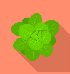 Green spinach icon flat style vector