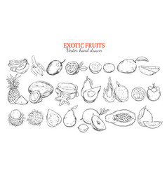 Monochrome exotic and tropical fruits collection vector