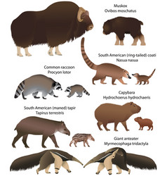 animals of america with cubs vector image
