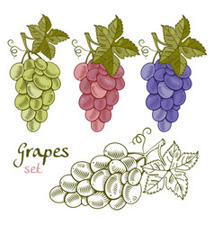grapes set vector image