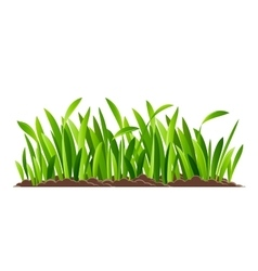Green grass isolated vector