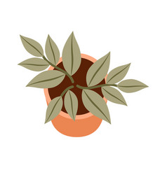 Home plant on a white background top view vector