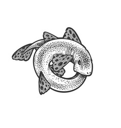 shark rolled in circle sketch vector image