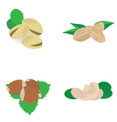 Nuts collection vector