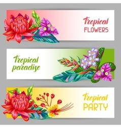 Banners with Thailand flowers Tropical multicolor vector