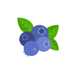 Bunch blueberry vector