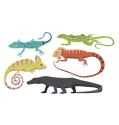 Different kind lizard reptile isolated vector