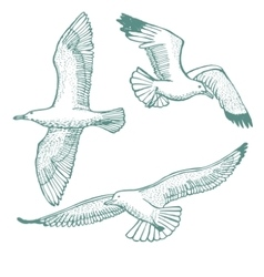 hand-drawn set of seagulls vector image