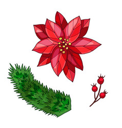poinsettia berry branch and spruce branch hand vector image