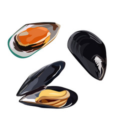Raw mussels in shells icon isolated on white vector