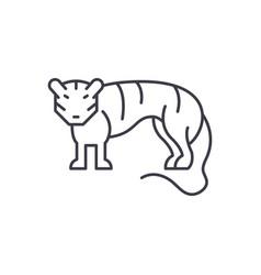 tiger line icon concept tiger linear vector image