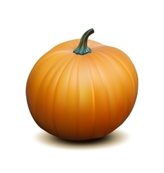 Orange realistic pumpkin vector image
