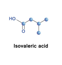 methylbutanoic isovaleric acid vector image