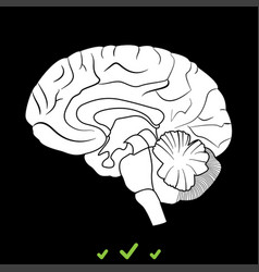brain it is white icon vector image