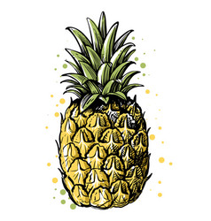 Pineapple on white background with leaves vector