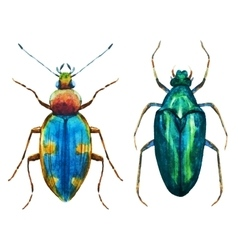 Watercolor bug beetle vector image