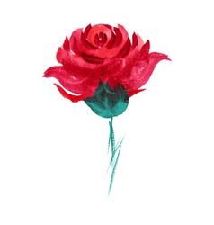 watercolor rose vector image
