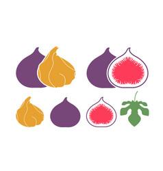 fig logo vector image