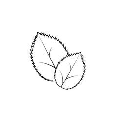 leaf line icon black vector image