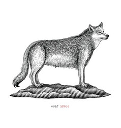 wolf hand draw vintage engraving style black and vector image