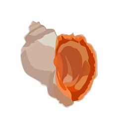 beautiful rapana venosa shell icon isolated vector image