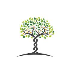 Family tree symbol icon logo vector