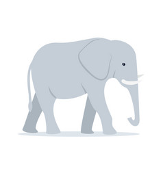 Walking adult elephant vector