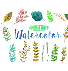 watercolor aquarelle branches and leaves vector image