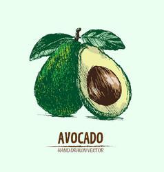 digital detailed color avocado hand drawn vector image vector image