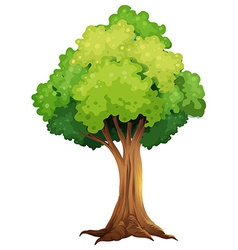 A giant tree vector image vector image