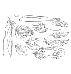 Feathers drawing black line fictitious isolated on vector
