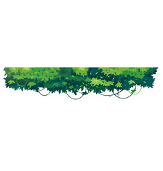 Tropical tree crowns isolated vector