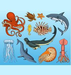 fishes set or sea creature nautilus pompilius vector image