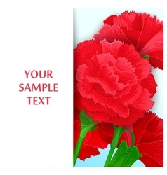 Card with flowers Carnations vector
