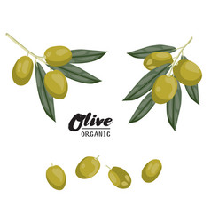 cartoon olives ripe green vegetable vegetarian vector image vector image