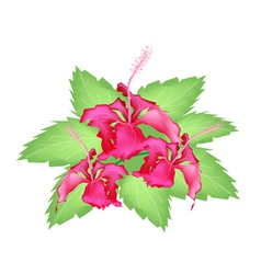 A Group of Fresh Red Hibiscus Flowers vector image