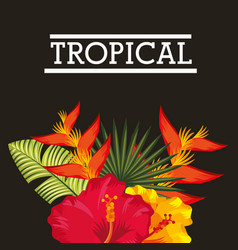 tropical flower leaves card vector image