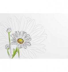 beautiful chamomiles vector image
