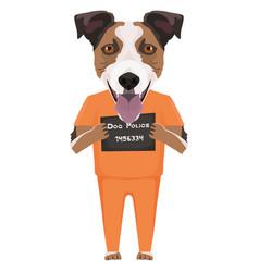 Mugshot prison clothes dog jack russell terrier vector