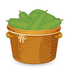 A backet of papaya vector